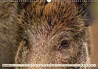 Unverwechselbar - Wildschwein (Wandkalender 2019 DIN A3 quer) - Produktdetailbild 11