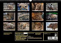 Unverwechselbar - Wildschwein (Wandkalender 2019 DIN A3 quer) - Produktdetailbild 13