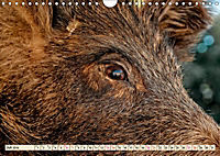 Unverwechselbar - Wildschwein (Wandkalender 2019 DIN A4 quer) - Produktdetailbild 7