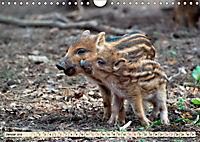 Unverwechselbar - Wildschwein (Wandkalender 2019 DIN A4 quer) - Produktdetailbild 1