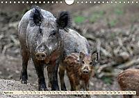 Unverwechselbar - Wildschwein (Wandkalender 2019 DIN A4 quer) - Produktdetailbild 4