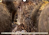 Unverwechselbar - Wildschwein (Wandkalender 2019 DIN A4 quer) - Produktdetailbild 3
