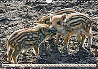 Unverwechselbar - Wildschwein (Wandkalender 2019 DIN A4 quer) - Produktdetailbild 6