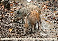Unverwechselbar - Wildschwein (Wandkalender 2019 DIN A4 quer) - Produktdetailbild 10
