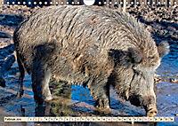 Unverwechselbar - Wildschwein (Wandkalender 2019 DIN A4 quer) - Produktdetailbild 2