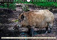 Unverwechselbar - Wildschwein (Wandkalender 2019 DIN A4 quer) - Produktdetailbild 8