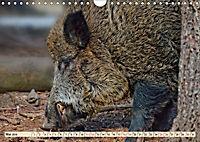 Unverwechselbar - Wildschwein (Wandkalender 2019 DIN A4 quer) - Produktdetailbild 5