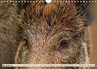Unverwechselbar - Wildschwein (Wandkalender 2019 DIN A4 quer) - Produktdetailbild 11