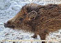 Unverwechselbar - Wildschwein (Wandkalender 2019 DIN A4 quer) - Produktdetailbild 12