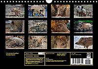 Unverwechselbar - Wildschwein (Wandkalender 2019 DIN A4 quer) - Produktdetailbild 13