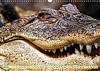 Urzeitreptilien - Krokodil (Wandkalender 2019 DIN A3 quer) - Produktdetailbild 7