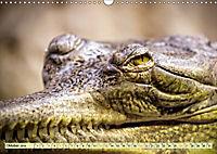 Urzeitreptilien - Krokodil (Wandkalender 2019 DIN A3 quer) - Produktdetailbild 10
