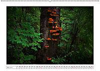 Vancouver Island (Wandkalender 2019 DIN A2 quer) - Produktdetailbild 3
