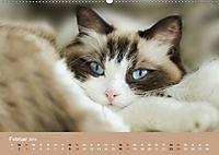 Verliebt in Ragdolls ... die sanfte Katzenrasse (Wandkalender 2019 DIN A2 quer) - Produktdetailbild 2