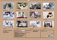 Verliebt in Ragdolls ... die sanfte Katzenrasse (Wandkalender 2019 DIN A2 quer) - Produktdetailbild 13