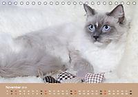 Verliebt in Ragdolls ... die sanfte Katzenrasse (Tischkalender 2019 DIN A5 quer) - Produktdetailbild 11