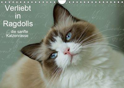 Verliebt in Ragdolls ... die sanfte Katzenrasse (Wandkalender 2019 DIN A4 quer), Marion Reiß-Seibert