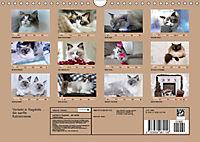 Verliebt in Ragdolls ... die sanfte Katzenrasse (Wandkalender 2019 DIN A4 quer) - Produktdetailbild 13