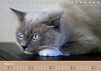 Verliebt in Ragdolls ... die sanfte Katzenrasse (Tischkalender 2019 DIN A5 quer) - Produktdetailbild 3