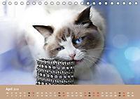 Verliebt in Ragdolls ... die sanfte Katzenrasse (Tischkalender 2019 DIN A5 quer) - Produktdetailbild 4