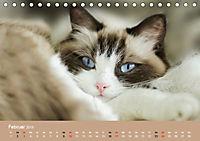Verliebt in Ragdolls ... die sanfte Katzenrasse (Tischkalender 2019 DIN A5 quer) - Produktdetailbild 2