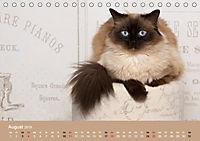 Verliebt in Ragdolls ... die sanfte Katzenrasse (Tischkalender 2019 DIN A5 quer) - Produktdetailbild 8