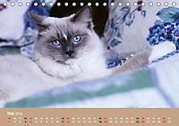 Verliebt in Ragdolls ... die sanfte Katzenrasse (Tischkalender 2019 DIN A5 quer) - Produktdetailbild 5