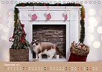 Verliebt in Ragdolls ... die sanfte Katzenrasse (Tischkalender 2019 DIN A5 quer) - Produktdetailbild 12