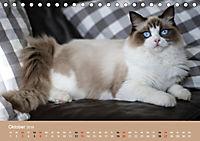 Verliebt in Ragdolls ... die sanfte Katzenrasse (Tischkalender 2019 DIN A5 quer) - Produktdetailbild 10