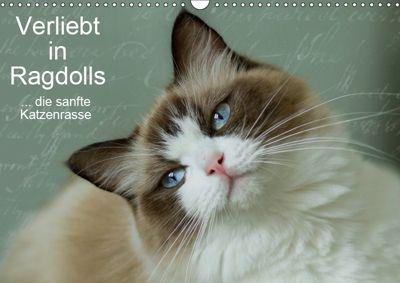 Verliebt in Ragdolls ... die sanfte Katzenrasse (Wandkalender 2019 DIN A3 quer), Marion Reiss-Seibert