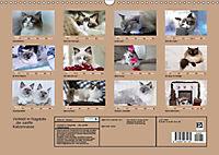 Verliebt in Ragdolls ... die sanfte Katzenrasse (Wandkalender 2019 DIN A3 quer) - Produktdetailbild 13