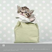 Verspielte Katzenbabys 2019 - Produktdetailbild 1