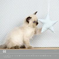 Verspielte Katzenbabys 2019 - Produktdetailbild 2