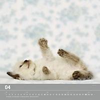 Verspielte Katzenbabys 2019 - Produktdetailbild 4