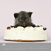 Verspielte Katzenbabys 2019 - Produktdetailbild 5