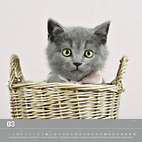 Verspielte Katzenbabys 2019 - Produktdetailbild 3