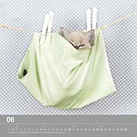 Verspielte Katzenbabys 2019 - Produktdetailbild 6