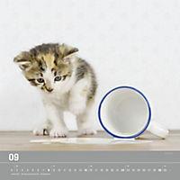 Verspielte Katzenbabys 2019 - Produktdetailbild 9