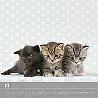 Verspielte Katzenbabys 2019 - Produktdetailbild 10