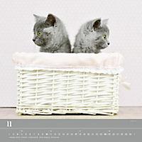 Verspielte Katzenbabys 2019 - Produktdetailbild 11