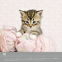 Verspielte Katzenbabys 2019 - Produktdetailbild 12
