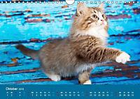 Verspielte Ragdolls -Sanfte Katzen in seidigem Haarkleid (Wandkalender 2019 DIN A4 quer) - Produktdetailbild 10