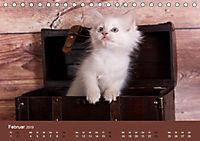 Verspielte Ragdolls -Sanfte Katzen in seidigem Haarkleid (Tischkalender 2019 DIN A5 quer) - Produktdetailbild 2