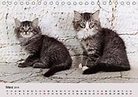 Verspielte Ragdolls -Sanfte Katzen in seidigem Haarkleid (Tischkalender 2019 DIN A5 quer) - Produktdetailbild 3