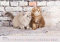 Verspielte Ragdolls -Sanfte Katzen in seidigem Haarkleid (Wandkalender 2019 DIN A2 quer) - Produktdetailbild 7