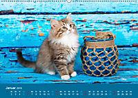 Verspielte Ragdolls -Sanfte Katzen in seidigem Haarkleid (Wandkalender 2019 DIN A2 quer) - Produktdetailbild 1