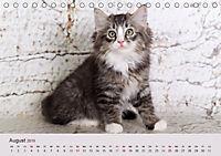 Verspielte Ragdolls -Sanfte Katzen in seidigem Haarkleid (Tischkalender 2019 DIN A5 quer) - Produktdetailbild 8