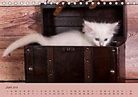Verspielte Ragdolls -Sanfte Katzen in seidigem Haarkleid (Tischkalender 2019 DIN A5 quer) - Produktdetailbild 6