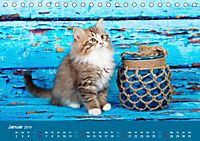 Verspielte Ragdolls -Sanfte Katzen in seidigem Haarkleid (Tischkalender 2019 DIN A5 quer) - Produktdetailbild 1