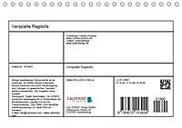 Verspielte Ragdolls -Sanfte Katzen in seidigem Haarkleid (Tischkalender 2019 DIN A5 quer) - Produktdetailbild 13